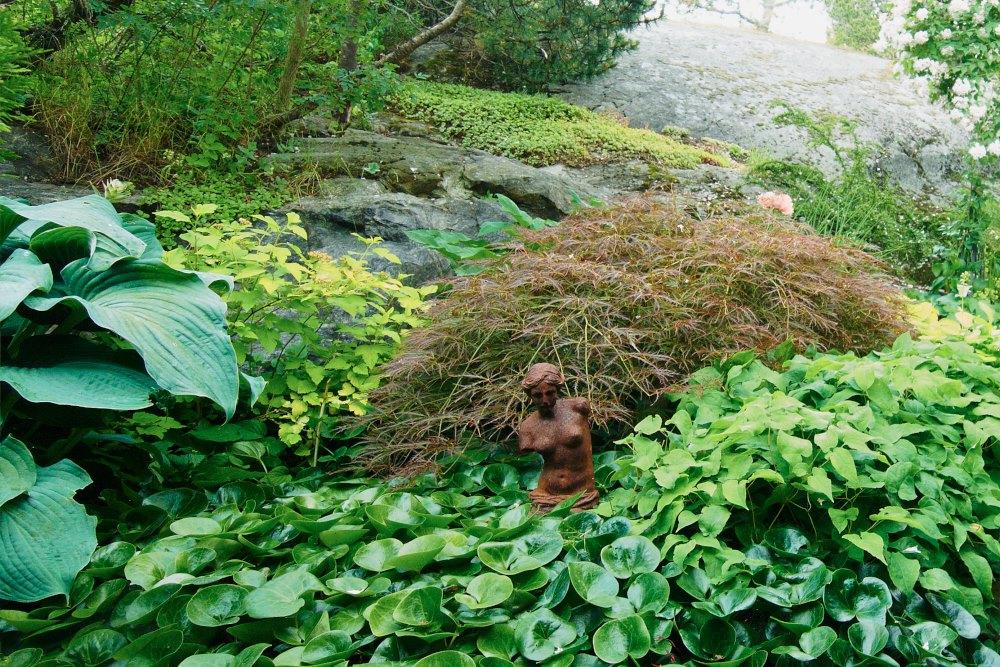 Funkia ''Big Daddy', smällspirea, Physocarpus opulifolius 'Dart's Gold', flikbladig japansk lönn, Acer palmatum 'Garnet', sockblomma, Epimedium och hasselört, Asarum europaeum.