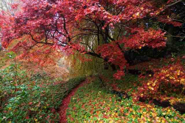 Japansk Trädgård Träd ~ Samling av de senaste inspirerande mönster för ditt hem och omgivande