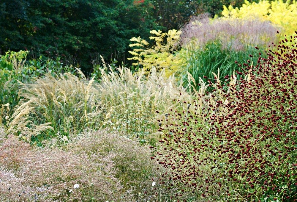 Flera olika former kan kombineras utan att det känns rörigt. Det ljusa fluffet i förgrunden är silverrisp Limonium platyphyllum. Till höger syns en blodtopps Sanguisorba distinkta avlånga knappar följt av silvergräsets Stipa calamagrostis och glansmiskantusens fluffiga blomplymer. Hårt mot mjukt och distinkt mot yvigt framhäver växternas olika karaktärer.
