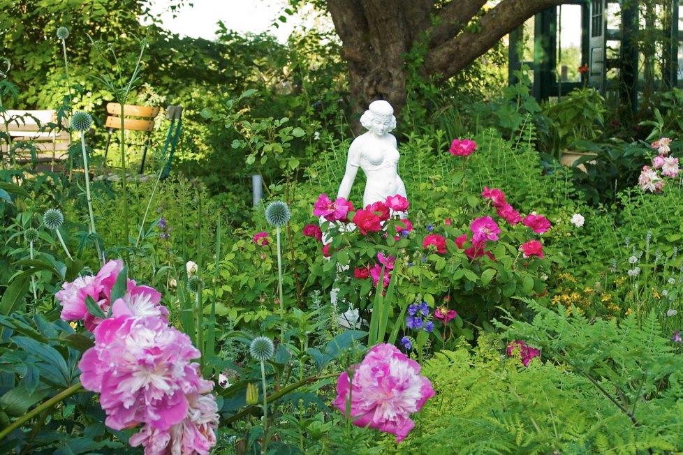Rosor ska inte stå ensamma brukar det sägas. I Maria Björklunds rosenträdgård på Österlen kan man dricka sitt kaffe bland rosor, pioner, blå bolltistel och blågull under äppelträdets skyddande krona.