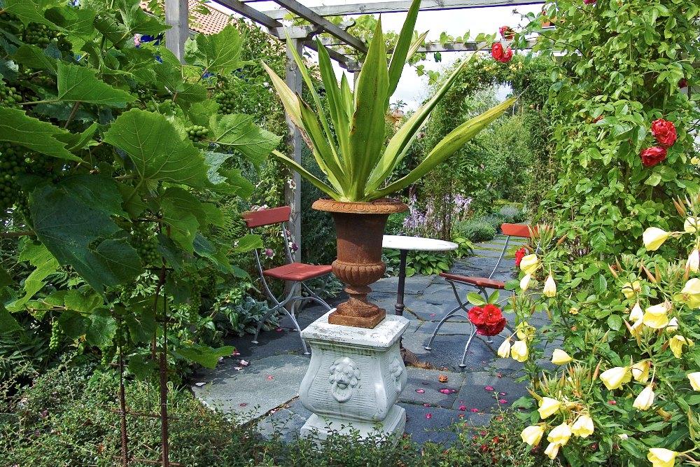 Agave i rostbrun urna ger den lilla terrassen en sydeuropeisk stämning. Till vänster i bilden skymtar ena änden av den magnifika vindruvsbågen. Till höger syns röda klängrosor, Rosa 'Flammentanz', i stilfull samplantering med gullnattljus, Oenothera fruticosa.