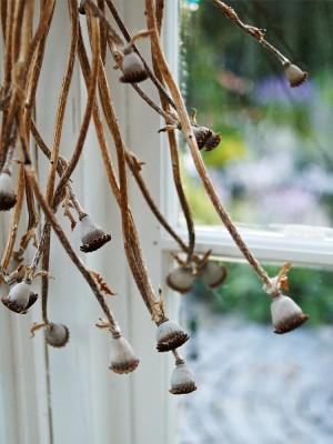 Med små medel kan man göra det hemtrevligt. Torkade frökapslar från tomtens stora ruggar av jättevallmo är sirligt vackra där de hänger i växthusets hörn.
