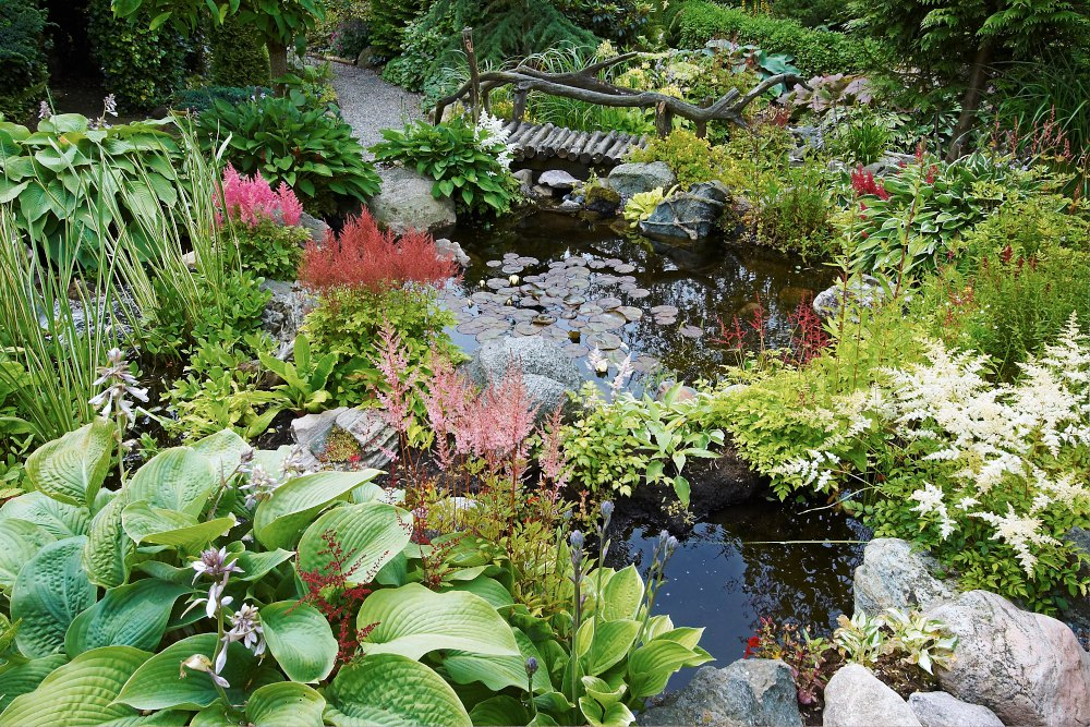 Många olika sorter av astilbe tillsammans med funkior bygger mycket av miljön runt de här två små trädgårdsdammarna i Halland. En knotig träbro av naturens stockar och grenar ger en rustik och lite gammaldags atmosfär.