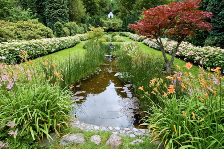 Vattenträdgården