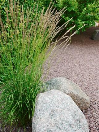 Invid stenbumlingarna i tomthörnet växer en rugge av det lättodlade prydnadsgräset tuvrör, Calamagrostis x acutiflora, 'Karl Foerster'.
