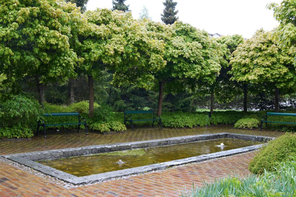 Klotlönn, Acer platanoides 'Globosum'