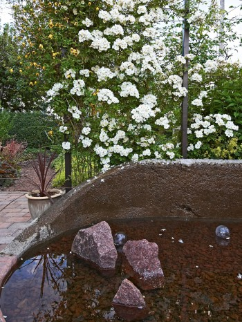 Den fyllda honungsrosen Rosa 'Hybrida', placerad vid övergången till lunden, sveper in hela uteplatsen i en underbar doft när den blommar i juli.