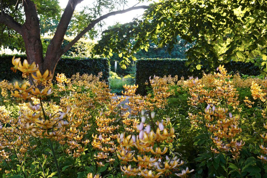Mandarinliljor, Lilium 'Mrs R. O. Backhouse', i massplantering ger en bedårande effekt i Drömparken i början av juli. Så här stora bestånd kan man så klart inte ha i en villaträdgård, men ett fält på 3–5 kvadratmeter med någon lökväxt man tycker mycket om är fullt möjligt.