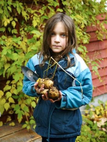 Att ta upp egen hemodlad potatis uppskattas lika mycket av barn som av vuxna.