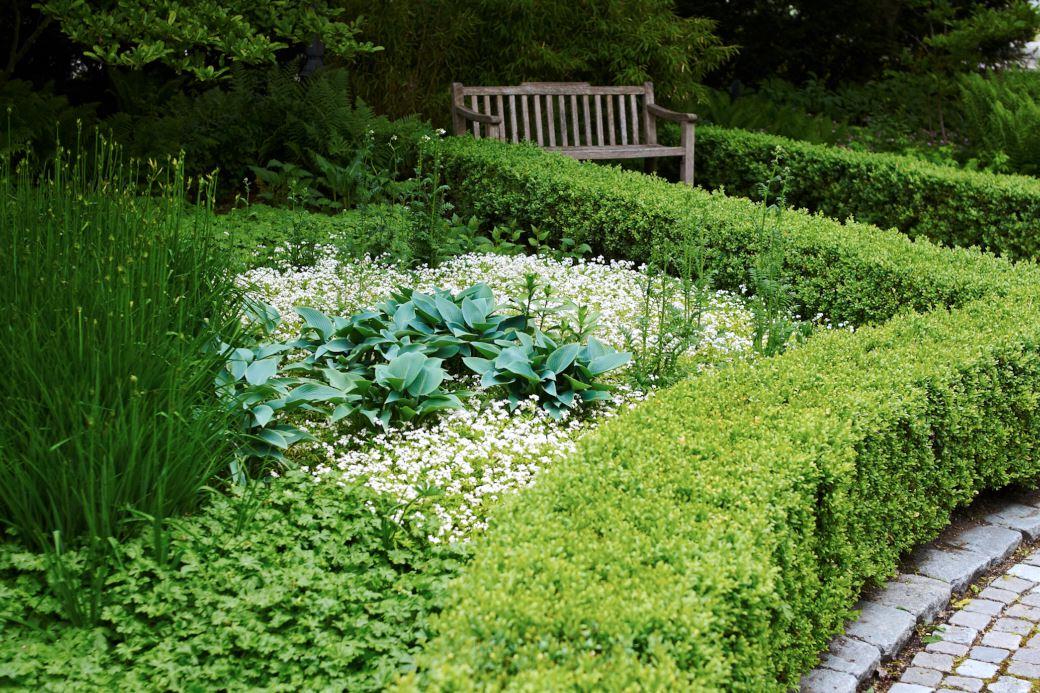 Liten flocknäva, Geranium × cantabrigiense 'Biokovo', myskmadra, Galium odoratum, blåfunkia, Hosta 'Halcyon' och vita blågull, Polemonium caeruleum 'Album'.