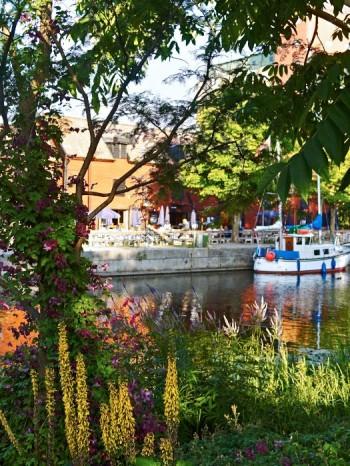 Högsommar i Klosterparken med blommande gullstav och viticella-klematis 'Södertälje' längs strandpromenaden.