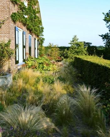 Svanfjädergräs har fått självså sig fritt närmast det Oudolfska huset. Fräckt och ovanligt.