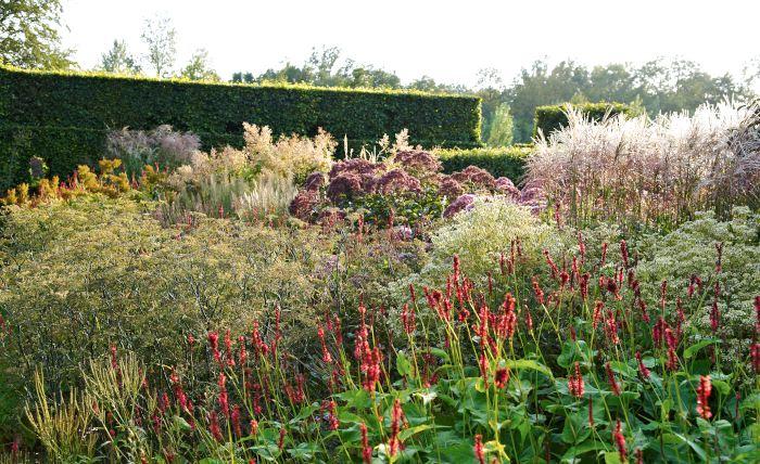 Den äldsta rabatten i Oudolfs trädgård som innehåller flera av hans favoritperenner, bland annat blodormrot, Persicaria amplexicaulis, i förgrunden.