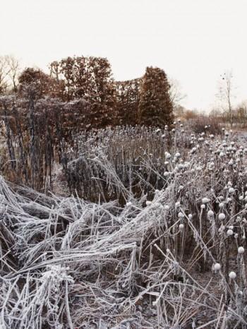 De vissnade perennerna lämnas kvar på stället fram till vårvintern. Många av dem står stadigt och gör rabatterna spännande och fantasifulla även under den kalla årstiden. Bild från Drömparken vid jultid.