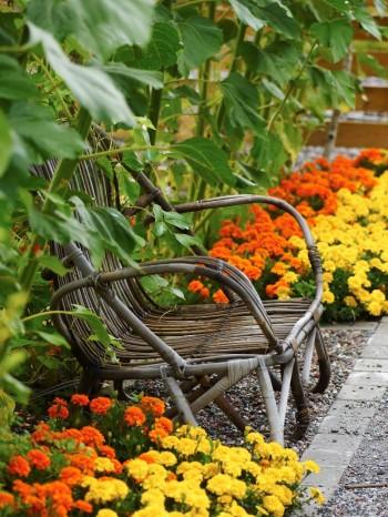 """Med en sittplats nära rabatten kan man njuta av växter på nära håll. I idéträdgården """"Öppna sinnen"""" längs Åpromenaden har den flätade stolen placerats mellan två rabatter med tagetes och planterat högresta solrosor mot ryggen."""