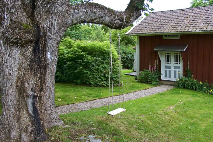 En klassisk trägunga i långa rep från en kraftig gren, i det gamla vårdträdet framför den röda stugan. Sinnebilden av en trädgårdsgunga. Bild från Drömmens trädgård.