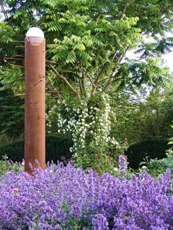 Manchurisk valnöt, Juglans mandshurica, fylld honungsros Rosa 'Hybrida' och kantnepeta, Nepeta × faassenii 'Walker's Low'
