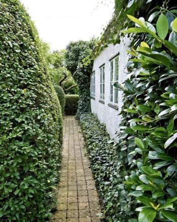 Klätterväxter och en välansad marktäckare, skuggröna, Pachysandra terminalis, invid väggen gör att hus och trädgård bildar en enhet. Gunnar Martinssons trädgård på Ven i Skåne.