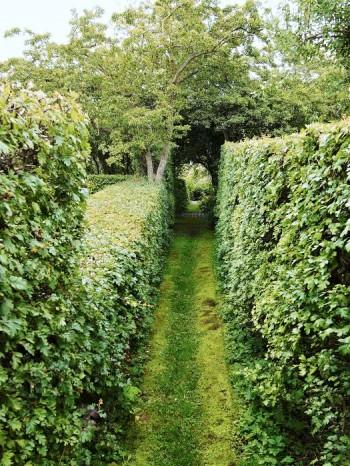 En stor del av Sven-Ingvar Andersson trädgård utanför Södra Sandby i Skåne är ett labyrintiskt område av hagtornshäckar, avgudad av barn som springer omkring, leker och jagar varandra.