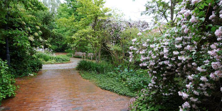 I Fridegårdsparken finns inga gräsmattor utan i stället är marken täckt av växter, marktegel och gatsten. Frodiga marktäckare väller in över hårdgjorda ytor och förstärker den starka rumslighet som skapats av buskar, träd och häckar. Marktäckaren närmast i bild är flocknäva och över den syns en överdådigt blommande paradisbuske. Det röda markteglet blir starkare i färgen när det är blött efter regn.