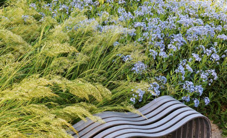 Det är skönt att slå sig ner för att avnjuta blomprakten på nära håll. Och vad kan vara mer inbjudande än en av växtlighet inramad och läckert designad bänk som dessutom är bekväm. Gräset som väller fram med sirliga blomplymer heter silvergräs, Achnatherum calamagrostis 'Lemperz', och blommar redan i mitten av juni. De isblå blommorna är så ovanliga att de ännu inte fått något svenskt namn. Rhazya orientalis heter de på latin.