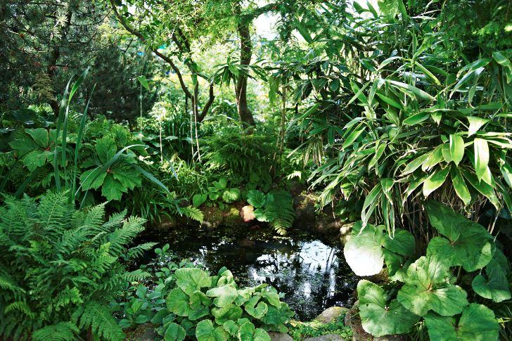 Som en vattenhål i bushen uppfattas dammen. Stilmässigt perfekt bland buskar och perenner. Här syns ormbunkar, klippstånds och storbladig palmbladsbambu.