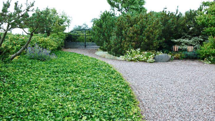 Innanför porten till den klassiska grusgården i väster. Vresrosor och enstaka tallar skyddar mot vind. Murgrönetäcket ger grön kontrast.