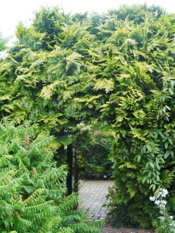 Välkommen genom porten till hemliga trädgården. De tre meter höga cypresserna var en gång varit miniträd i jularrangemang. Fliksumaken, Rhus typhina 'Dissecta', är lättodlad trots sitt exotiska utseende.