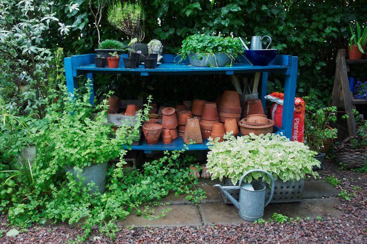 Utanför växhuset förvarar Ingemo terrakottakrukor, runtom står växter i kärl. Arrangemanget är lika mycket en utsmyckning som till nytta.