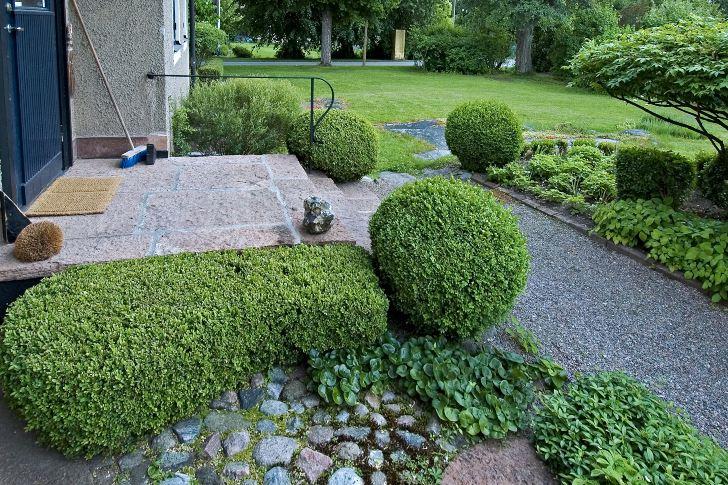 Likt en upphöjd tät matta breder den välklippta buxbomen ut sig vid sidan om trappavsatsen hos Barbro Sörman på Lidingö. Trappavsatsen upplevs som bredare och får starkare bindning till trädgården.