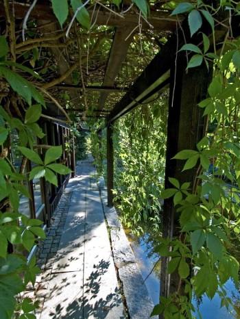 Under den av engelmannsvin, Parthenocissus quinquefolia var. engelmannii, inklädda pergolan silas solljus till behaglig styrka. Livgivande skiftningar mellan skuggiga och solbelysta partier skapas längs Villa Fraxinus i Ångermanland.