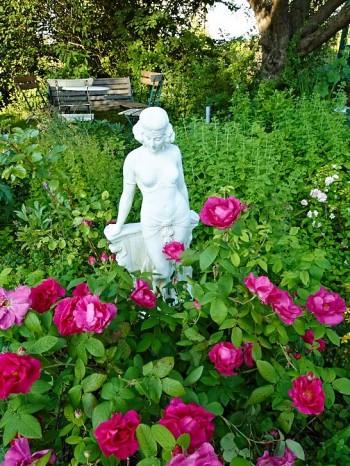 Under det stora äppelträdet får både sittplats och en romantisk rabatt med rosor plats. Statyn, som konstnärinnan Maria Björklund fått av sin man, fungerar som blickfång.