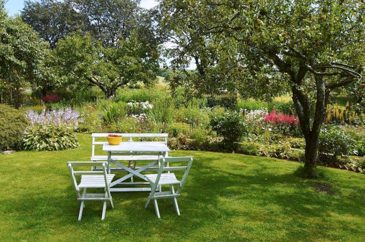 Nyplockade röda vinbär i en bunke vid sittplatsen under äppelträdet, vi är många som vill ha det så. Rabatterna blommar romantiskt och utsikten mot de omgivande betesmarkerna är bevarad. Ljuvligheten är ingen tillfällighet. Thelma Jacobson, som skapat trädgården tillsammans med maken Bengt, kommer från England, och har medvetet byggt upp en trädgård i romantisk engelsk stil.