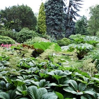 Krakows botaniska trädgård