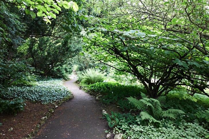 Gång genom arboretet i Krakows botaniska trädgård