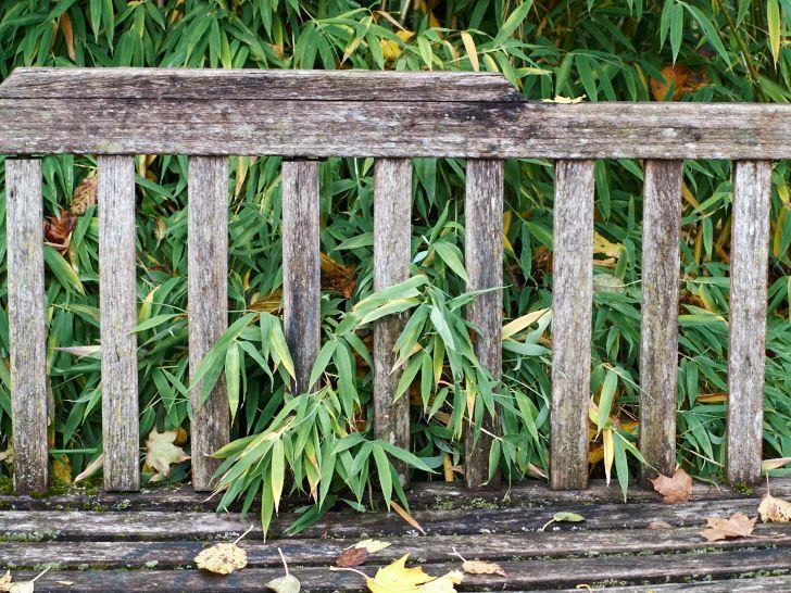 Bänk och bambu i Blomstergården