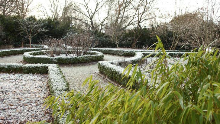 Formklippta häckar ger struktur till trädgården både sommar och vinter. Använder man städsegrön buxbom Buxus sempervirens som här i Blomstergården i Enköping får man dessutom lite grön färg även under den avlövade årstiden. Bergbambu Fargesia murielae 'Jumbo' som syns i förgrunden är en annan superb växt för att få vintergrönska. Den har dessutom ljust gröna blad, vilket inte så många vintergröna buskar har.