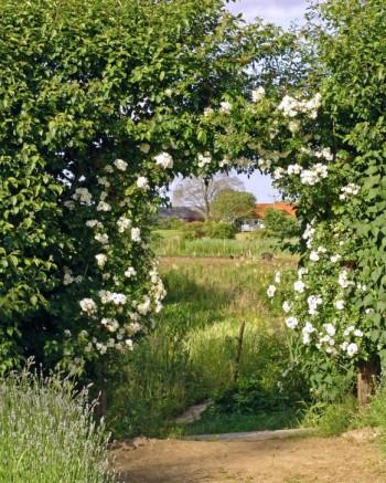 Genom en portal av ljuvligt blommande vita klängrosor i den kombinerade blomster- och köksträdgården ser man ut över de böljande österlenska fälten som omger Mandelmanns trädgårdar i Rörum på Österlen. En vacker utblick som för in det omgivande landskapet i trädgårdsrummet.