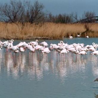 Svarta tjurar, vita hästar och rosa flamingo − Camargue