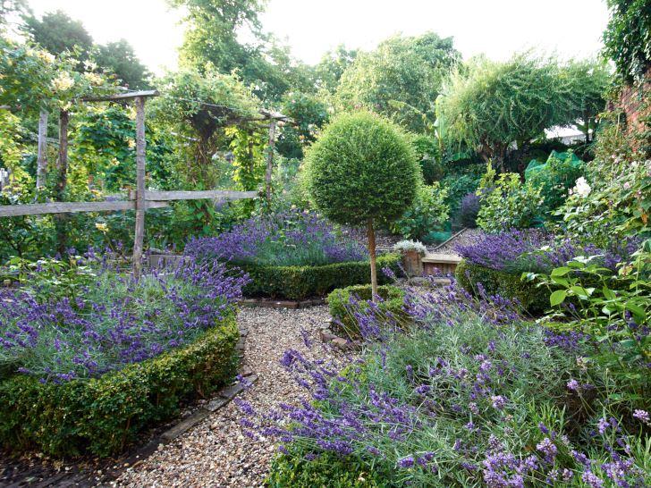 Lavendel innanför låga häckar av klippt buxbom är klassiskt. Bilden är från Wickham Lodge i engelska Kent, men det finns inget som hindrar att man härmar och gör likadant upp till i alla fall Mellansverige, villkoret är att det är väldränerat och soligt.