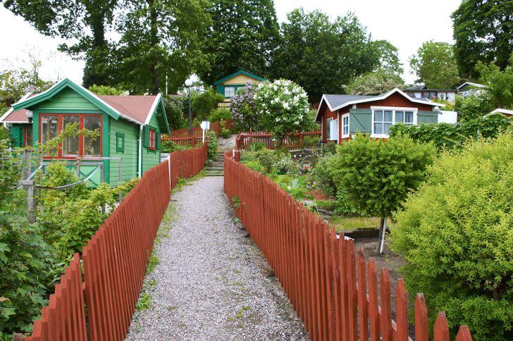Det är bra med starka benmuskler när man strosar runt upp och ner längs gångarna i Tantolundens koloniträdgårdar, om man inte har det lär man få det. De röda, smakfulla staketen som liksom bär upp lummigheten återkommer överallt.