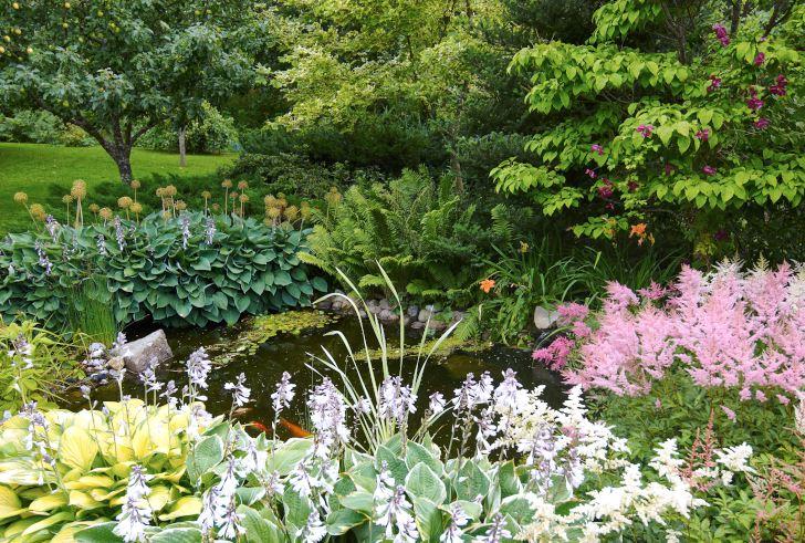 Vegetationen väller ut över dammens kanter. Astilbe av okänd härkomst samsas med funkior som 'Fringe Benefit' och 'Gold Standard', liksom ormbunkar och dagliljor. I bakgrunden klättrar klematis 'Södertälje' i en ligustersyren.