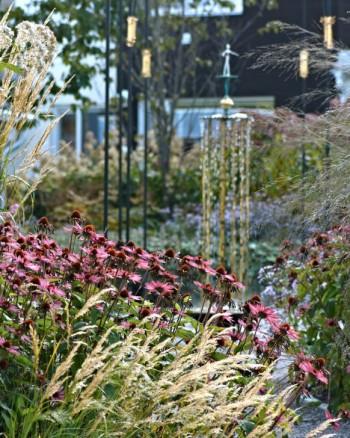 En lågmäld kombination som passar moderna hus och fasader är silvergräs, Achnatherum calamagrostis, framför ett bestånd av röd solhatt, Echinacea purpurea.
