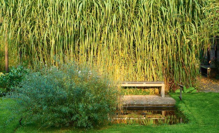 En enkel bänk med ryggen mot ett bestånd av elefantmiskantus och utsikt över en damm är exotiskt så det räcker. Bild från Mien Ruys trädgård i Holland. Fullt görligt i Sverige.
