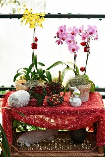 I jularrangemang istället för julstjärna, passar inte orkidéer bra där så säg? Förresten så passar de till nästan vad som helst.