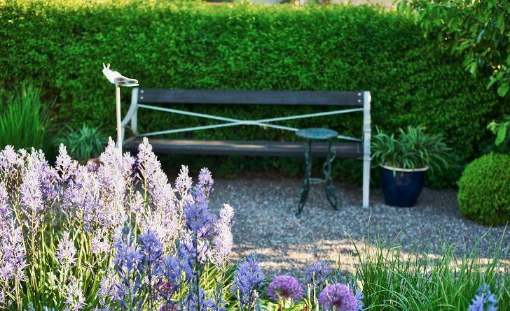 Hemma hos Agneta Sjöstedt i Sollentuna ser man från soffan ut över perennrabatten där mörk stjärnhyacint 'Caerulea och purpurlök 'Purple Sensation' blommar. Trädgården är utformad av den svenske superkändisen Ulf Nordfjell.