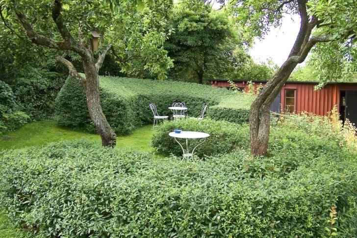 Dubbla sittplatser omslutna av breda bågformade ligusterhäckar skapar en spännande och annorlunda miljö i Sven-Ingvar Anderssons trädgård i Södra Sandby utanför Lund.Notera hur den bortre häckens överdel lutar inmot sittplatsen och därmed ytterligare markerarden. Knotiga gamla fruktträd bidrar med tak och förstärker ytterligare den ombonade och charmiga atmosfären.