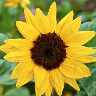 ♣ En kortlek med tips för en charmig trädgård ♣