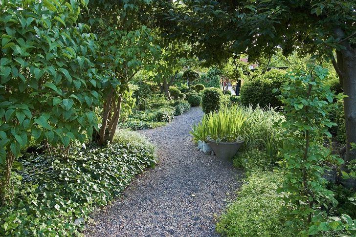 En grusgång kan vara vacker i många sammanhang. Här, i Barbro Sörman trädgård på Lidingö, förhöjer den intrycket av en välkomponerad trädgård där växternas form och bladverk har huvudrollen. Grusets knastrande ljud när man går genom det bidrar till att skapa en behaglig atmosfär. Marken under syrenerna till vänster i bilden täcks av den formsköna marktäckaren hasselört, Asarum europaeum, vars blanka blad bildar en elegant och tät matta.