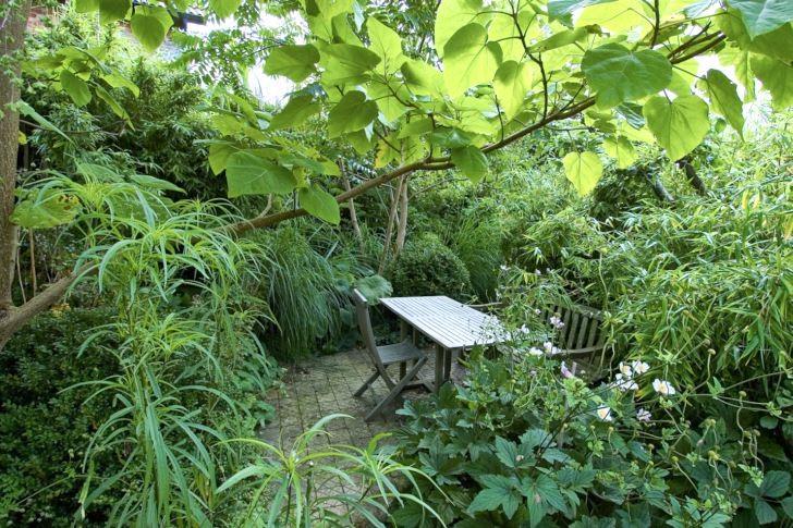 Som i en glänta i djungeln gömd för omvärlden känns den av frodig växtlighet inramade sittplatsen hemma hos Gunnar Martinsson på Ven. Det här är en av flera skyddade sittplatser i den sluttande trädgården som utan rumsbildande planteringarna blivit kraftigt utsatt för väder och vind. Runt sittplatsen växer bland annat bambu och buxbom tillsammans med ljuvliga höstanemoner som syns blomma i förgrunden.